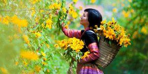 Mỗi mùa Mộc Châu – Thảo nguyên của tình yêu có vẻ đẹp khác nhau, Mộc châu là cao nguyên đẹp của Miền bắc, Quý khách đitour Mộc Châumỗi dịp cuối tuần của bốn mùa có những trải nghiệm và thưởng thức sắc đẹpkhác nhau của Cao nguyên Mộc châu