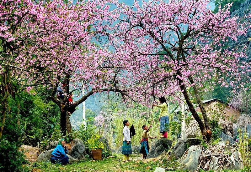 Khám phá hoa cải trắng Mộc Châu – Ký sự du lịch